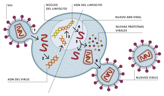 26- C_NAT-esquemadeingresodehivalacelula